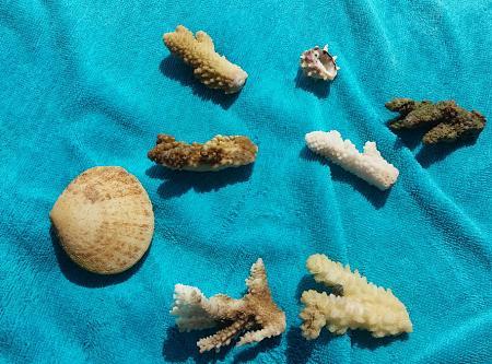 Нажмите на изображение для увеличения Название: Кораллы и ракушкив  Египте.jpg Просмотров: 75 Размер:97.0 Кб ID:1104