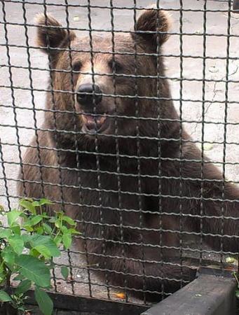Нажмите на изображение для увеличения Название: Медведь.jpg Просмотров: 191 Размер:44.7 Кб ID:170