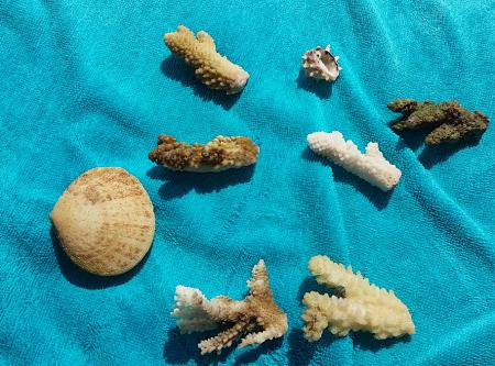 Нажмите на изображение для увеличения Название: Кораллы и ракушкив  Египте.jpg Просмотров: 25 Размер:97.0 Кб ID:1104