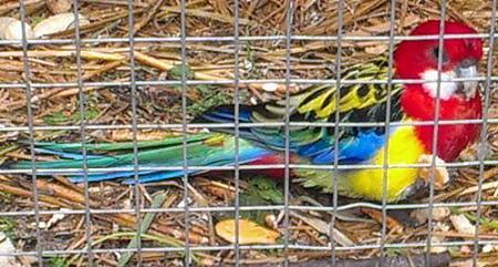 Нажмите на изображение для увеличения Название: Попугай.jpg Просмотров: 211 Размер:84.7 Кб ID:173