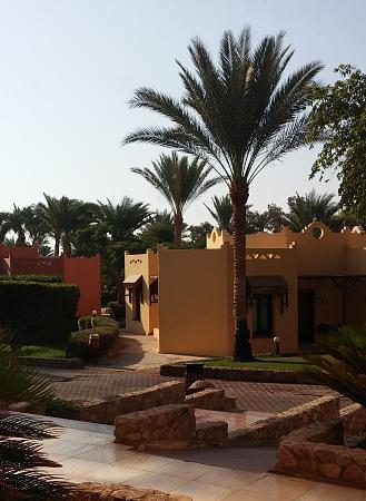 Нажмите на изображение для увеличения Название: Шарм-Эль-Шейх пальмы.jpg Просмотров: 120 Размер:95.4 Кб ID:1102
