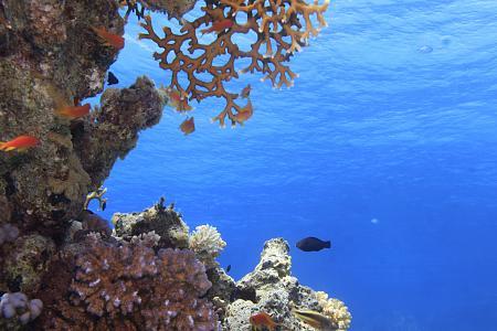 Нажмите на изображение для увеличения Название: Море в Египте на фото.jpg Просмотров: 126 Размер:93.8 Кб ID:1103