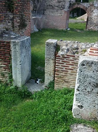 Нажмите на изображение для увеличения Название: Римские термы в Варне.jpg Просмотров: 51 Размер:101.2 Кб ID:519